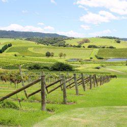 crooked river winery- sarah and brad